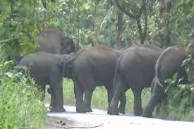 Photo of महासमुंद के बाद मुंगेली में विचरण कर रहा हाथियों का झुंड