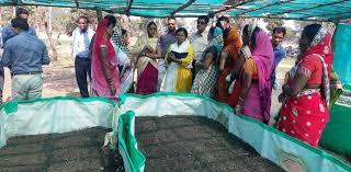 Photo of महासमुंद : गौठान ग्रामों में महिला स्व-सहायता समूह द्वारा जैविक खाद उत्पादन कर प्राप्त कर रहें हैं आमदनी